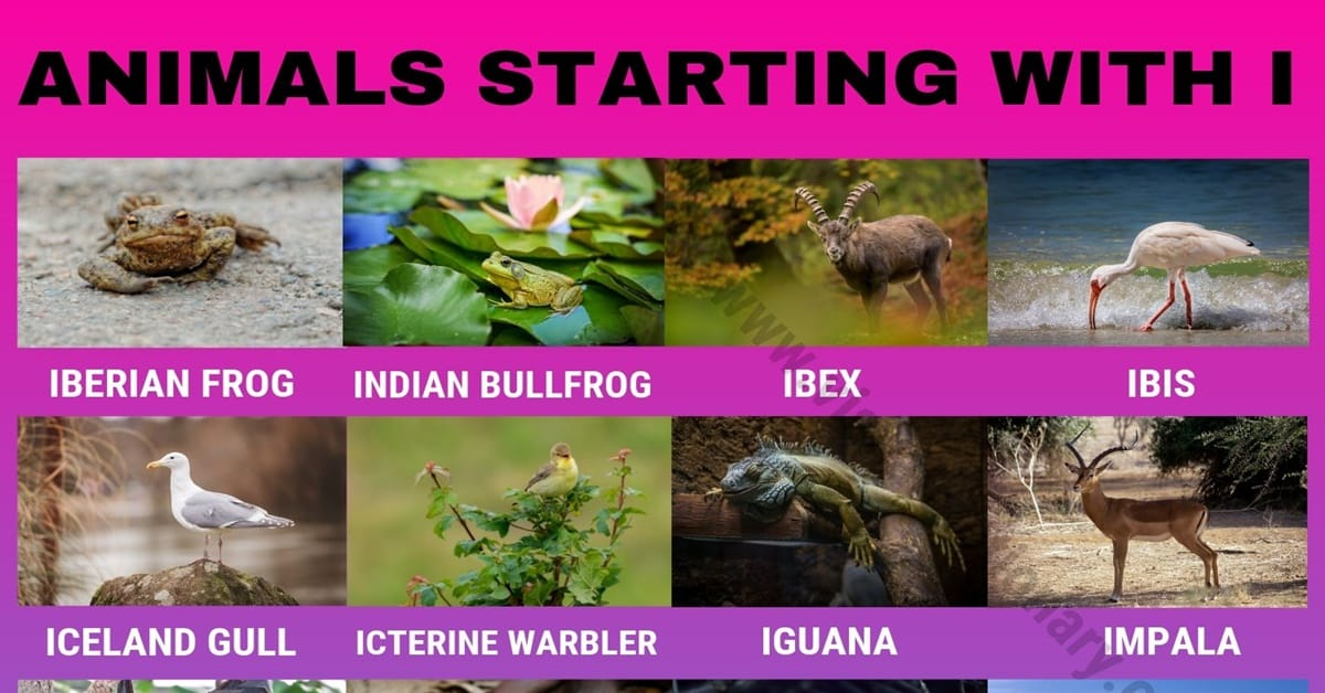 Animals that Start with I