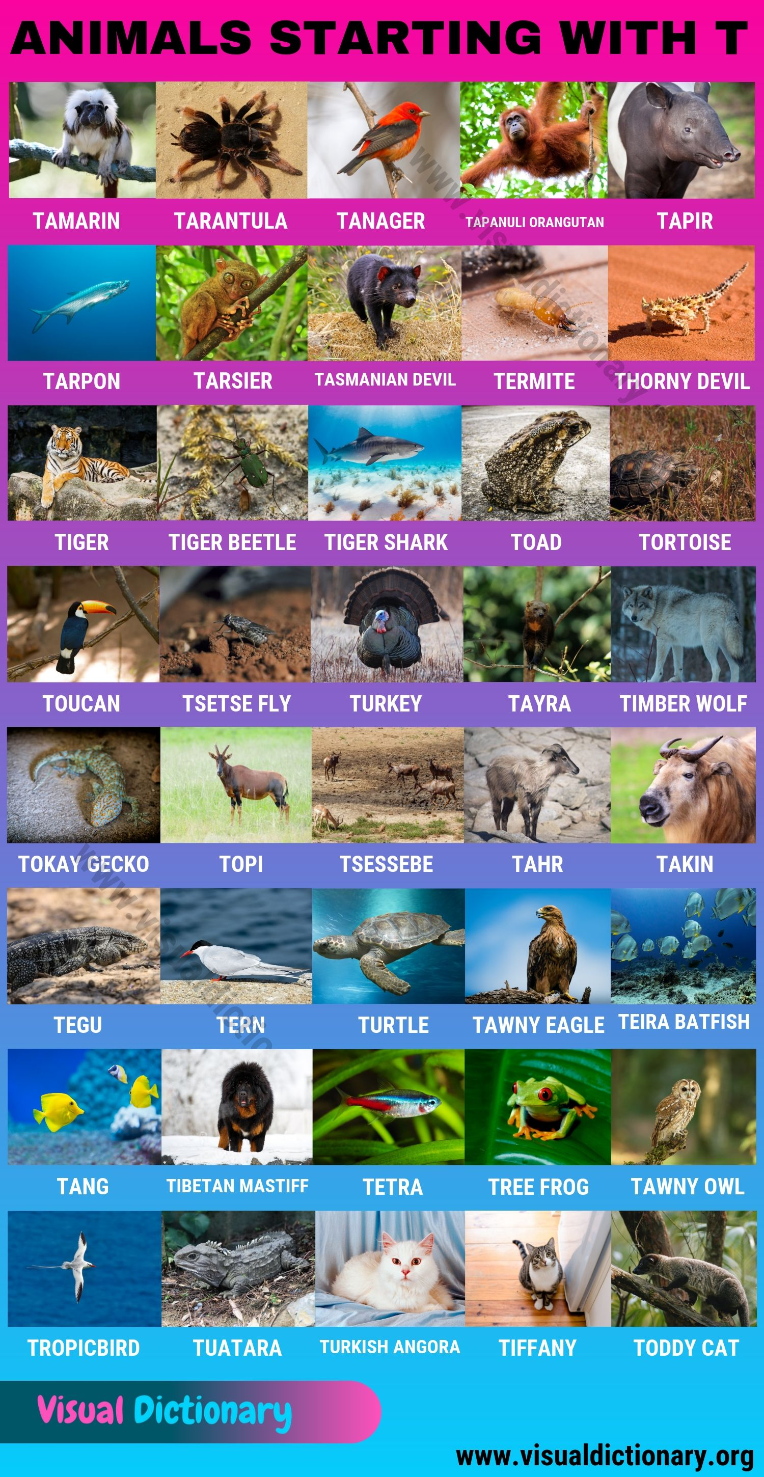 Animals that Start with T