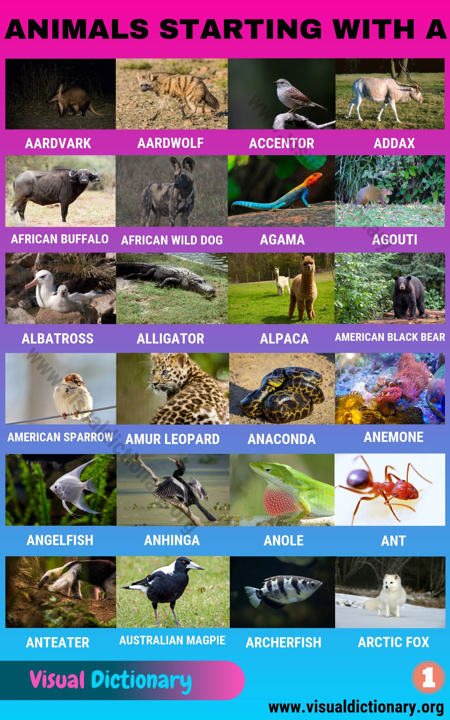 Animals that Start with A