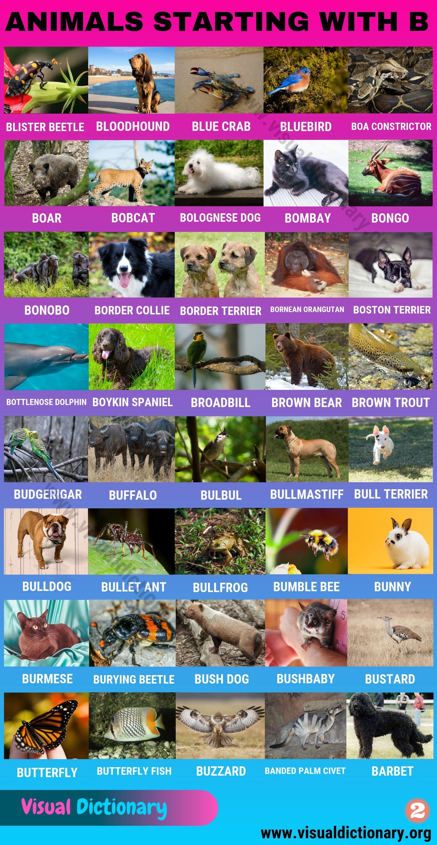 Animals Starting with B