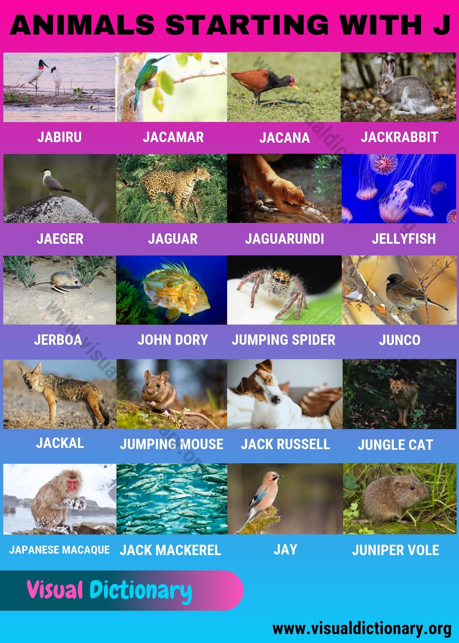 Animals that Start with J