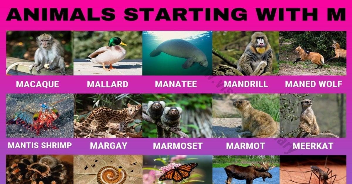 Animals that Start with M