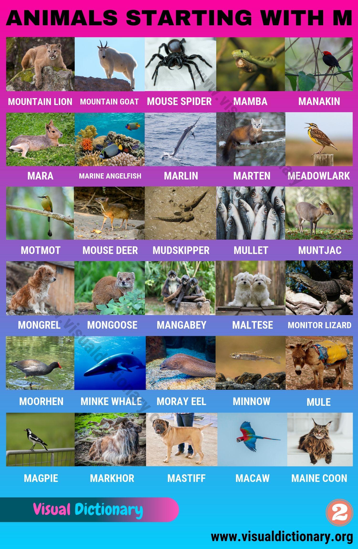 Animals Starting with M