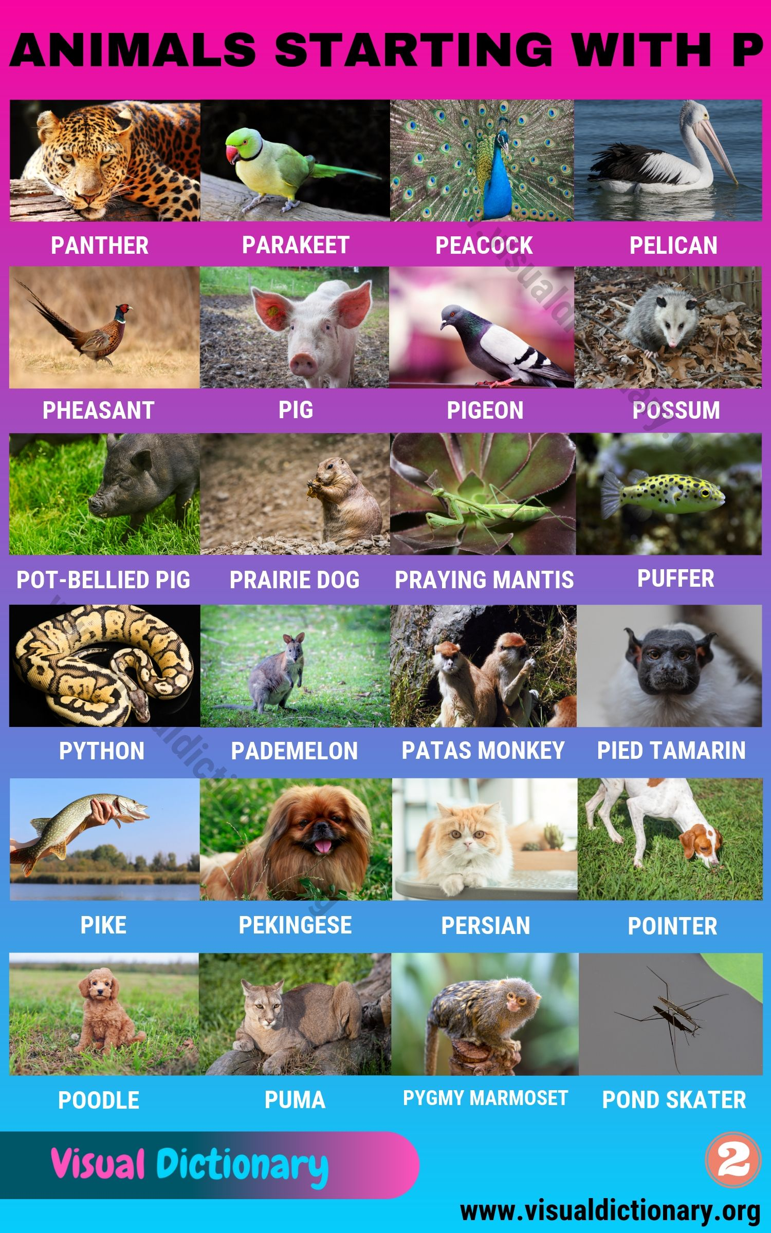 Animals that Start with P