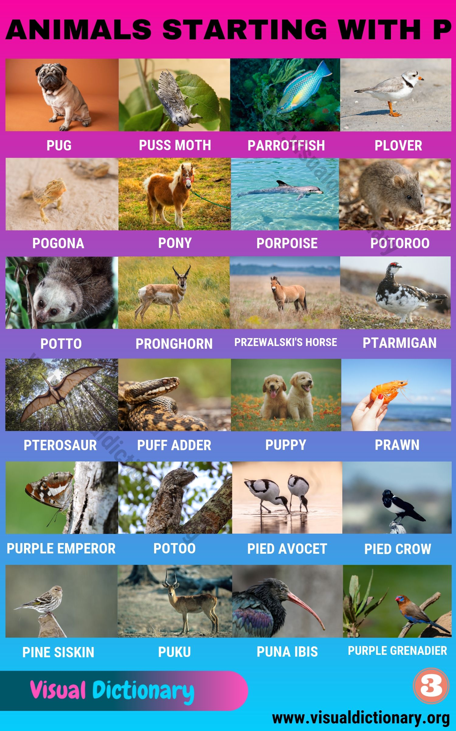 Animals Starting with P