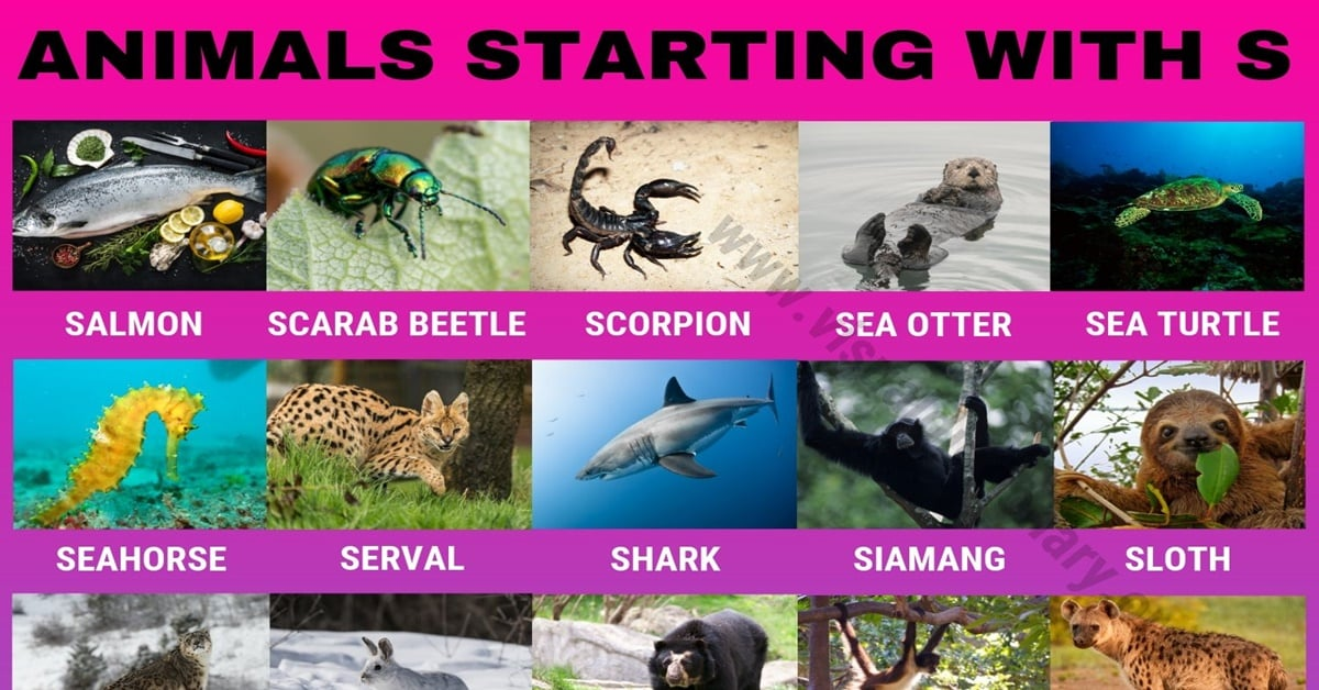 Animals that Start with S
