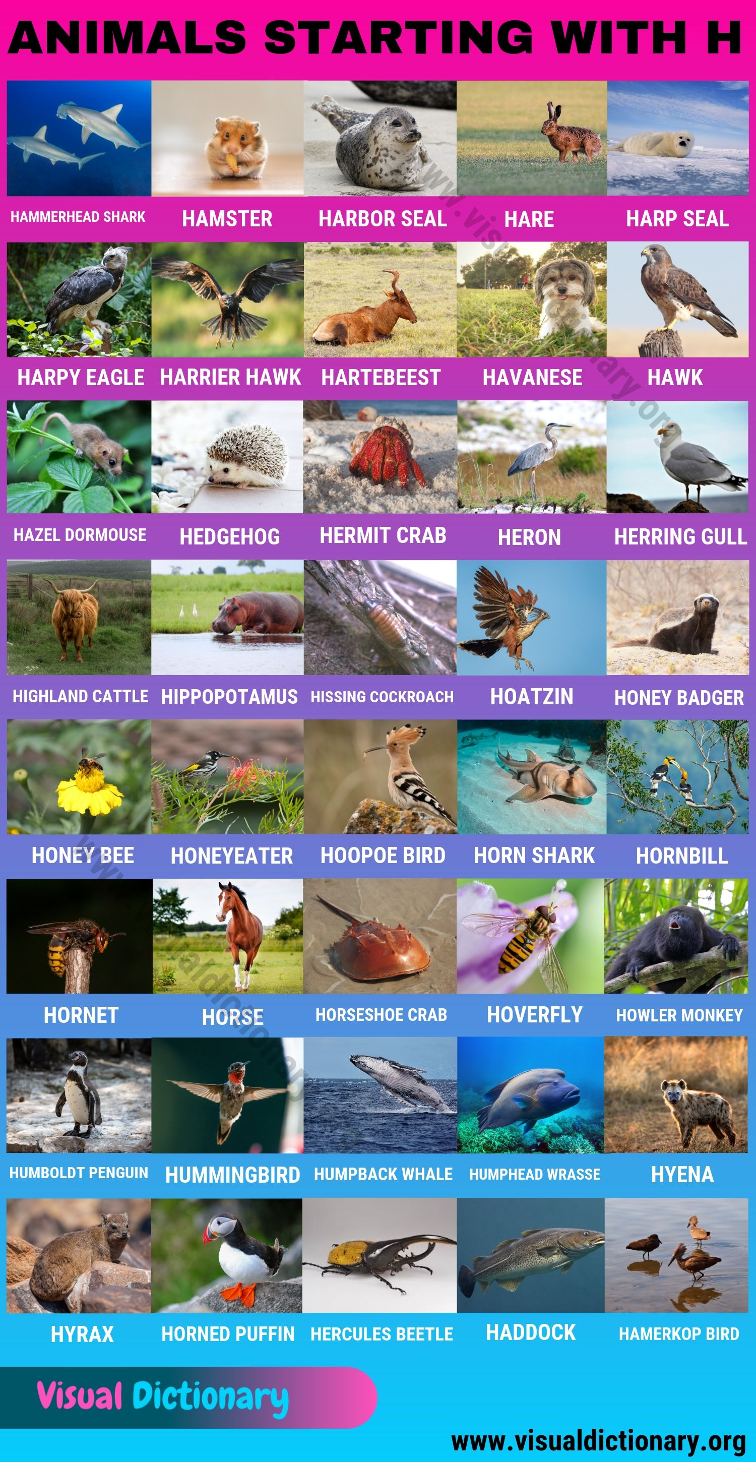 Animals that Start with H