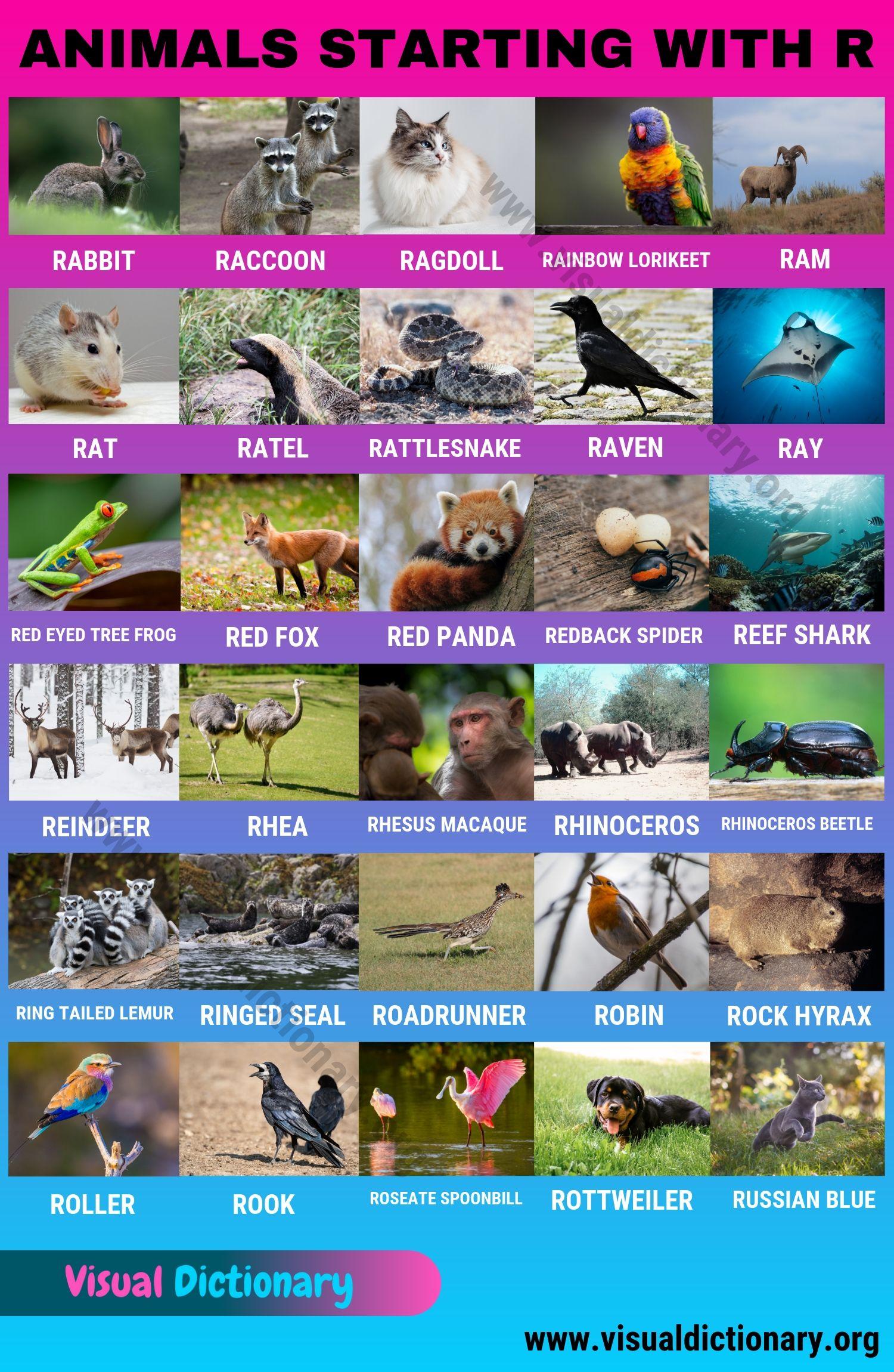 Animals that Start with R