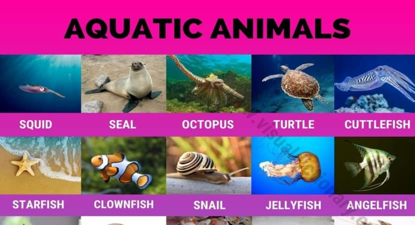 Aquatic Animals