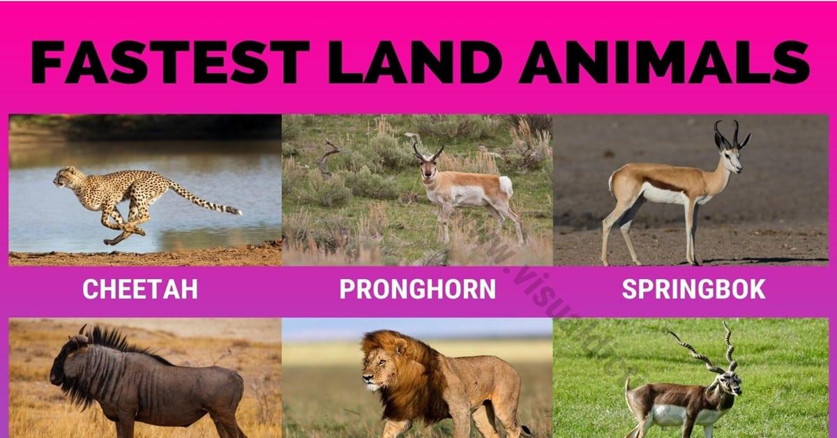 Fastest Land Animals
