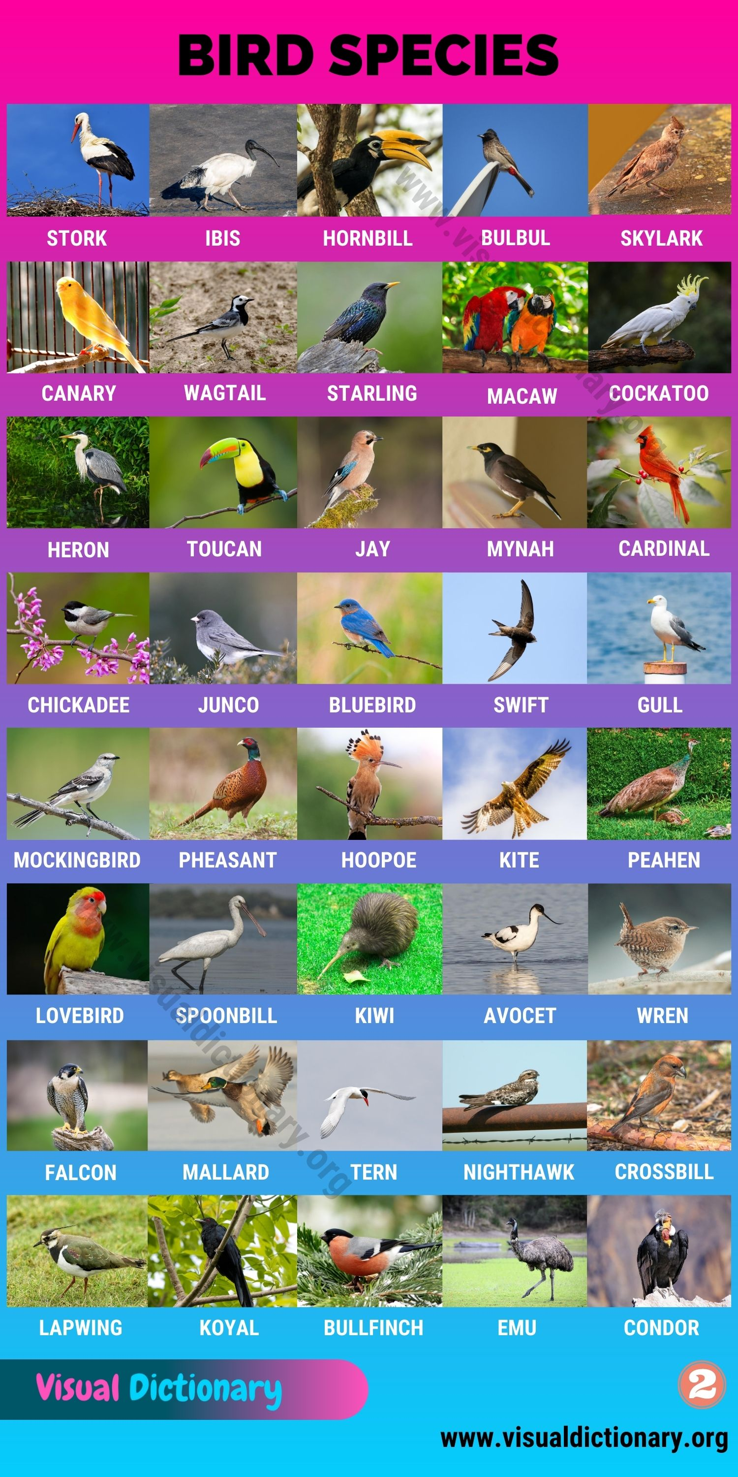Types of Birds